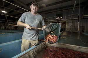 man scooping goldfish