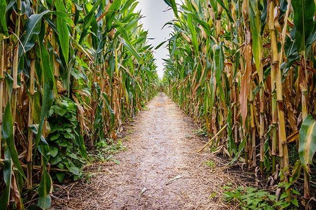 Agritourism Brings in Millions in Revenue for Arkansas